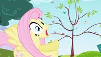 Fluttershy gasp S01E01