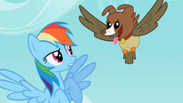 Rainbow Dash sees the owl and dog hybrid S2E07