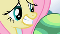 Fluttershy cute stare S2E7.png