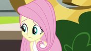 Fluttershy wonders what to do for Twilight EG3
