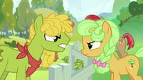 Pear family stallion vs. Goldie Delicious S7E13