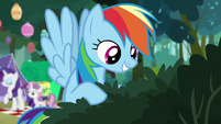 Rainbow Dash looking through the bushes S7E16