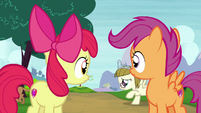 Apple Bloom and Scootaloo watch Zipporwhill chase Ripley S7E6