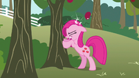 Pinkie Pie hit by apple S3E13