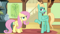 Zephyr agrees to Fluttershy's conditions S6E11.png