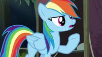 Rainbow Dash humoring Quibble's theory S6E13