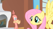201px-Fluttershy waiting for Philomena to sing S01E22