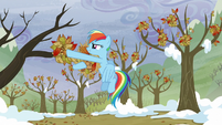 Rainbow puts the leaves back to the trees S5E5