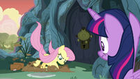 Fluttershy starts digging a hole S7E20