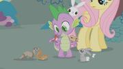 Spike cuidando los animales de Fluttershy