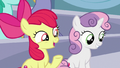 "Apple Bloom ""are you excited to see Rainbow Dash?"" S7E7.png"