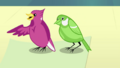 Birds communicating with Fluttershy EGDS10.png