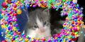 Bronyboybro cats 6.jpg