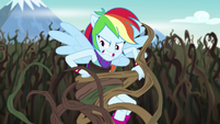Rainbow Dash wrestling with bramble vines EG4