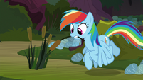 Rainbow with a cattail in her teeth S8E17