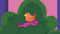 Constance perching on Scootaloo's head S8E12.png