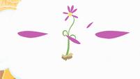 Flower petals drop S4E11
