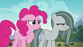 Marble Pie glaring at Limestone Pie S8E3.png