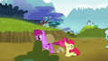 Berryshine gallops past Apple Bloom S5E4.png