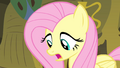 Fluttershy 'I just don't think I could sing in front of' S4E14.png
