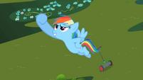 Rainbow Dash's Victory S2E8