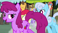 Berryshine and Shoeshine pass in front of Apple Bloom S7E13.png