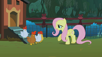 Fluttershy and the chickens S01E17