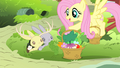 Fluttershy giving bunnies a basket of foods S4E14.png