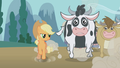 Applejack and the cows S01E04.png