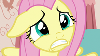 Fluttershy pleading to Discord S7E12