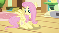 Fluttershy taking a look S3E13.png