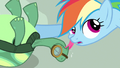 Rainbow Dash getting affection S3E11.png