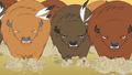 Buffalo charging Rainbow Dash and Pinkie S01E21.png
