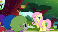 Fluttershy begins her story S1E23