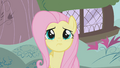 Fluttershy is not sure S1E7.png