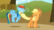 S01E13 Applejack droczy się z Rainbow