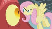 Fluttershy confrontando o dragão S1E07