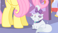 Opalescence nicely groomed S01E17.png