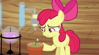 Apple Bloom -more or less- S4E15