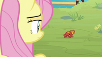 Pegasus Angel looking at Zecora's gecko S9E18