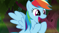 "Rainbow Dash ""awesome!"" S8E17"