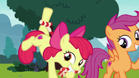 Apple Bloom enticing Ripley with chew toy S7E6