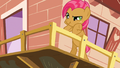 Babs Seed listening to Scootaloo shout at her S3E04.png