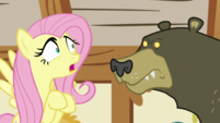 Fluttershy asking Harry about her hiding place S5E21