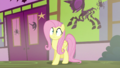 Fluttershy backs into a wall S5E21.png