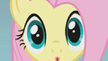 Fluttershy realizes something S1E07.png