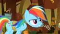 Rainbow Dash's detached head S1E13