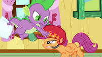 Spike putting his helmet on Scootaloo's head S3E11