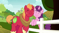Big Mac and Sugar Belle nuzzling cheeks S8E12.png