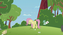 Filly Fluttershy sad S5E25
